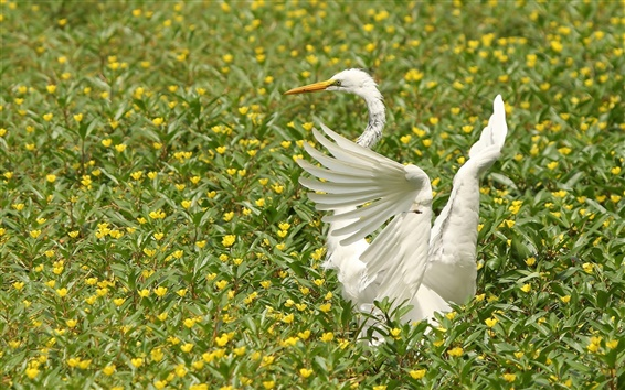 Wallpaper White heron, wings, flowers, birds