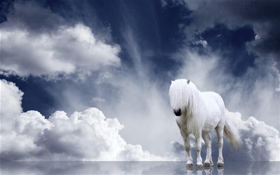 Fond d'écran Cheval blanc, crinière, nuages