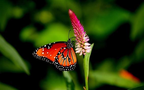 Wallpaper Butterfly, wings, flower, petals, bokeh