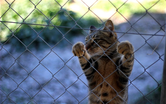 Wallpaper Cat, whiskers, paws, fence
