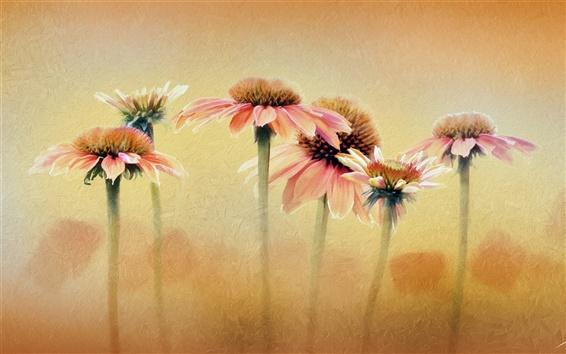 Fond d'écran Couleur, texture, fleurs