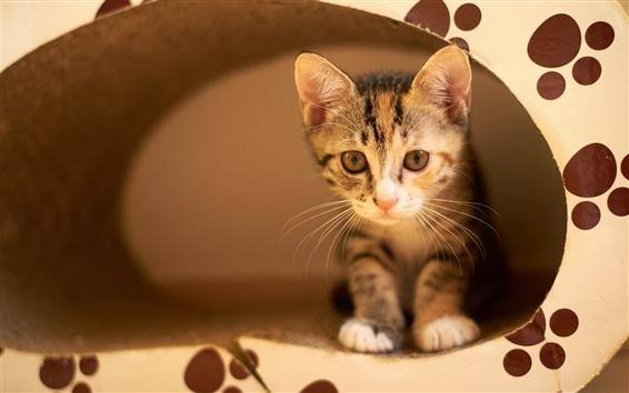 Fondos de pantalla Lindo gatito, oculto