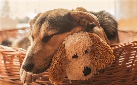 Wallpaper Dog sleeping, toy