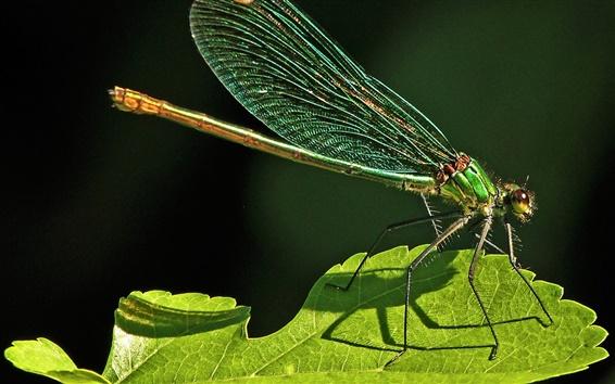 Обои Стрекоза, насекомые, зеленый лист