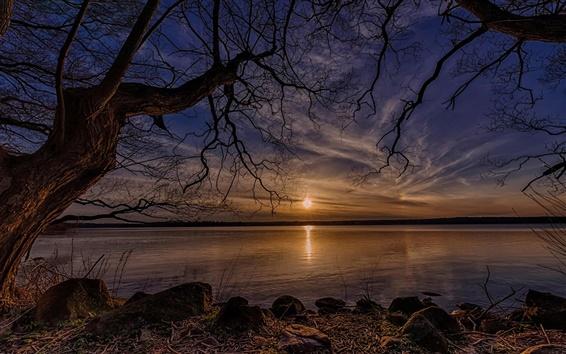 Papéis de Parede Árvores secas, lago, sol, pôr do sol, a Dinamarca