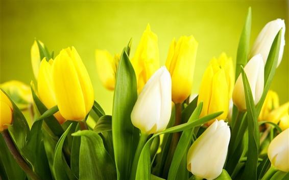 Papéis de Parede Close-up, tulipas, branco, amarelo Flores