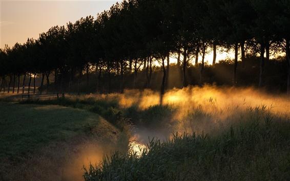 Papéis de Parede Névoa, árvores, campo, grama, raios do sol, manhã