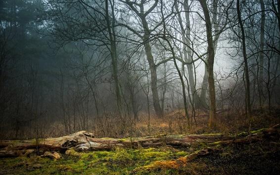 Papéis de Parede Floresta, árvores, névoa, grama, musgo
