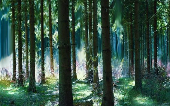 Fond d'écran Forêt, les arbres, l'été, l'art magique