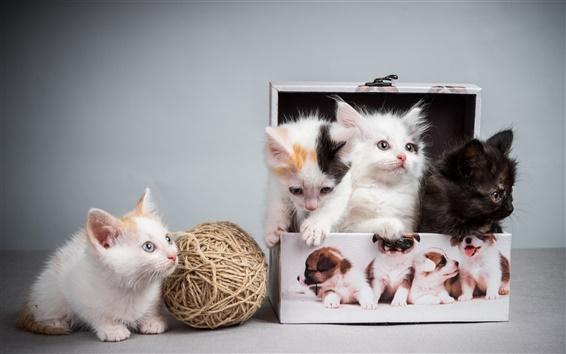 壁紙 フォー子猫、ボックス