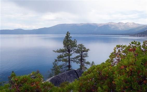 Wallpaper Lake Tahoe, Nevada, USA, trees, plants