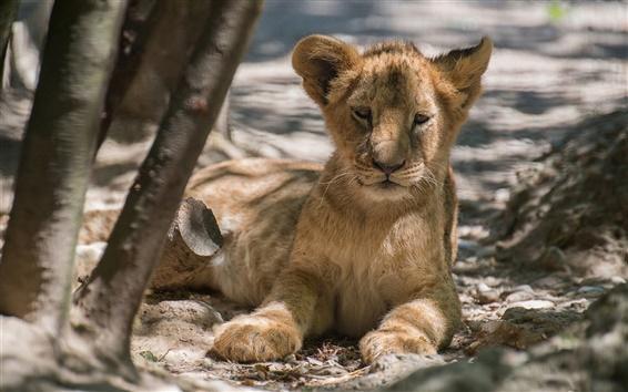Papéis de Parede Filhote de leão, árvores