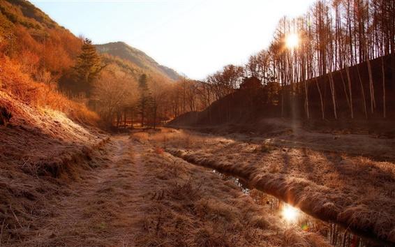 Обои Утро, деревья, туман, трава, солнечный свет