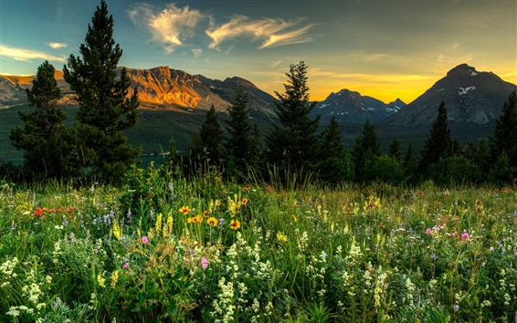 Wallpaper Nature landscape, mountains, wildflowers, trees, dawn