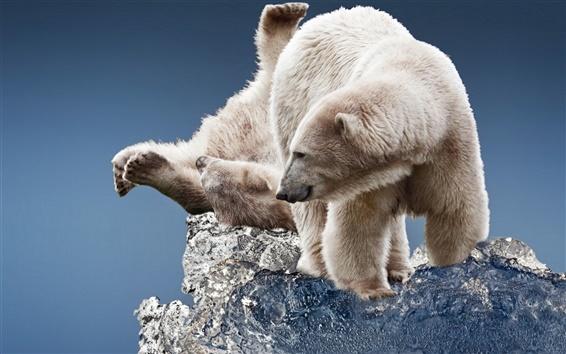 Papéis de Parede Urso polar, bloco de gelo