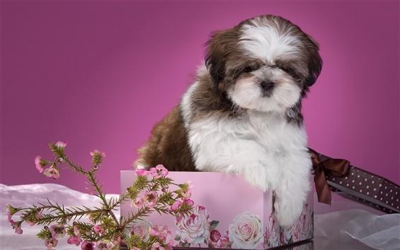 Papéis de Parede Filhote de cachorro, flores, caixa