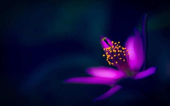 Wallpaper Purple flower, petals, macro photography, black background