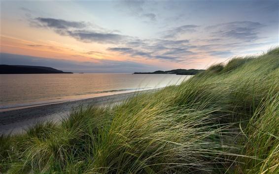 Fond d'écran Mer, coucher de soleil, l'herbe, le vent