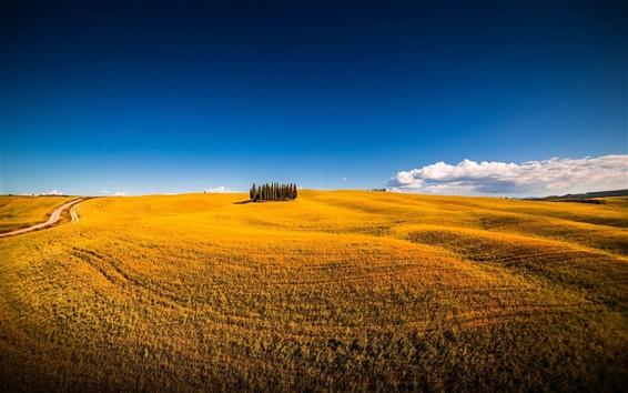 Fond d'écran Sienne, Italie, Montalcino, l'été, les arbres, les champs