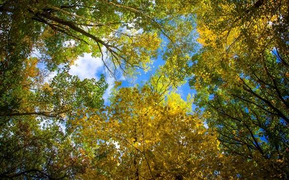 Wallpaper Sky, leaves, autumn, trees