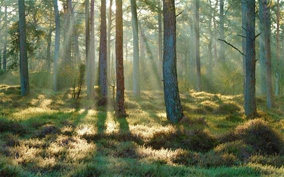 Fondos de pantalla Primavera, bosque, hierba, luz del sol, por la mañana