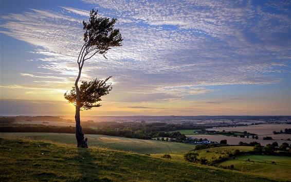 Fond d'écran Coucher de soleil, arbre, herbe, ciel, nuages