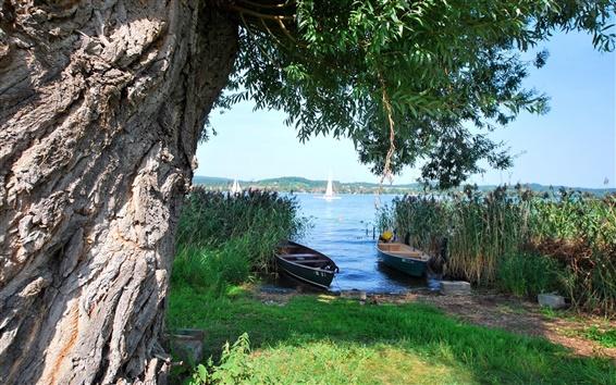 壁紙 木、川、ボート、プール、芝生