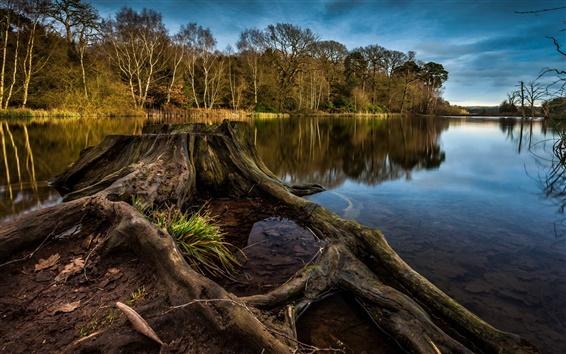 Wallpaper Tree stump, lake, trees