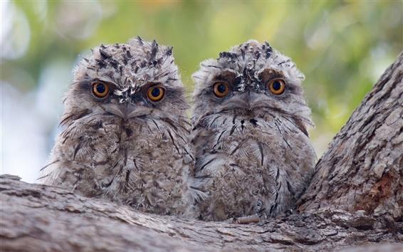 Обои Дерево, две птицы, сова