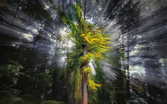 Papéis de Parede Árvore, madeira, vigas, luz solar