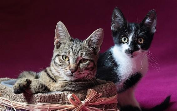 Обои Два котята, коробка, представляют