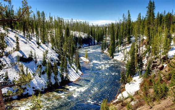 壁紙 イエローストーン国立公園、アメリカ、冬、木、雪