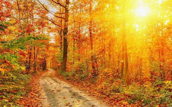 Обои Осень, лес, дорога, деревья, красные листья, солнечный свет