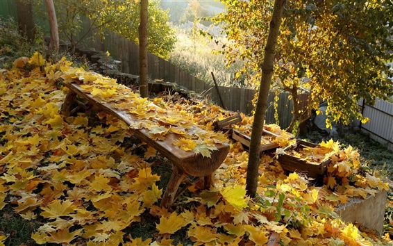 Wallpaper Autumn, yellow leaves, bench, fence