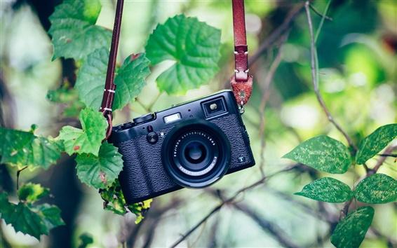 Wallpaper Camera, green, leaves