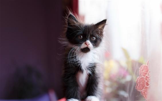 Wallpaper Cute kitten, black white, bokeh