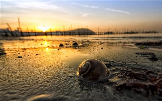 Wallpaper Dawn, morning, sunrise, snail