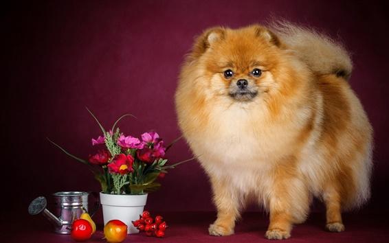 Обои Собака, цветы, фрукты