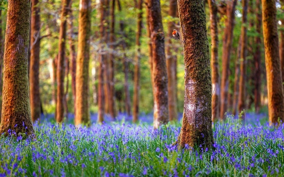 Wallpaper England, forest, trees, blue flowers, nature landscape