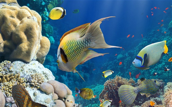 Wallpaper Fish, sea, underwater, coral reef