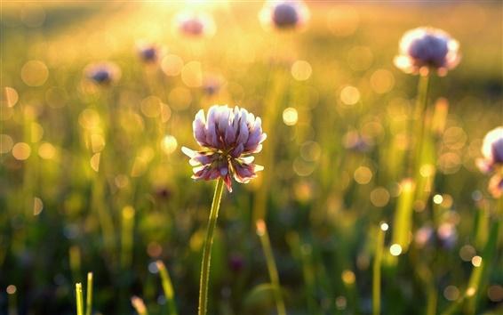 Wallpaper Flowers, bokeh, sunlight, morning