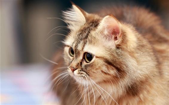 Обои Пушистый кот, усы, глаза