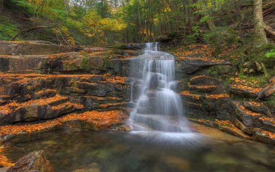 Papéis de Parede Floresta, árvores, outono, rochas, cachoeira, riacho