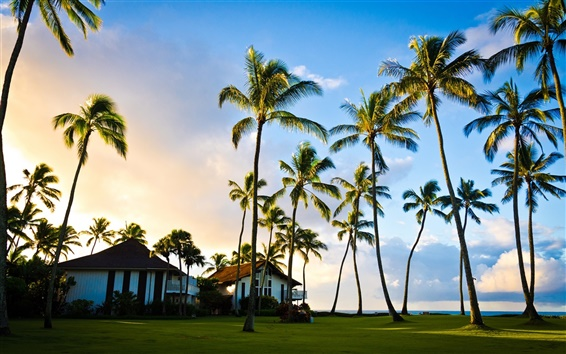 Wallpaper Hawaii, Kauai, beautiful scenery, palm tree, summer, house