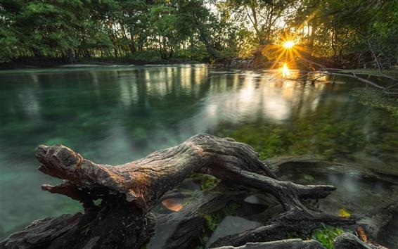 Fondos de pantalla Río de la selva, árboles, mañana, la luz del sol
