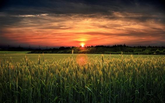 Обои Утро, восход солнца, поля, деревья, красное небо