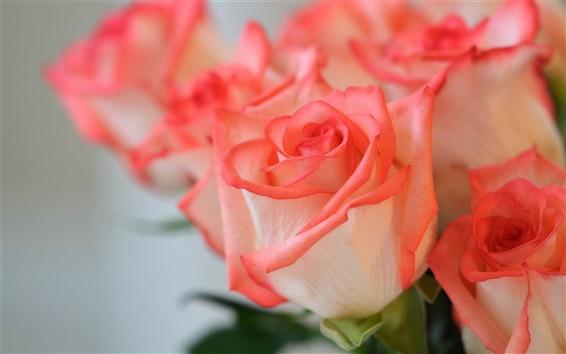 Wallpaper Pink flowers, roses, petals