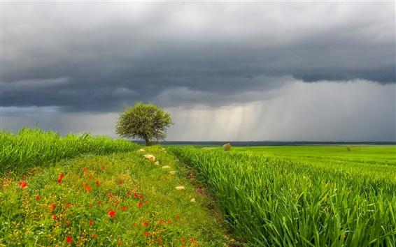 Обои Небо, облака, трава, дерево, цветы, шторм