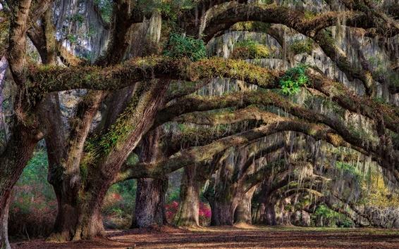 Wallpaper South Carolina, Charleston, USA, trees, spring