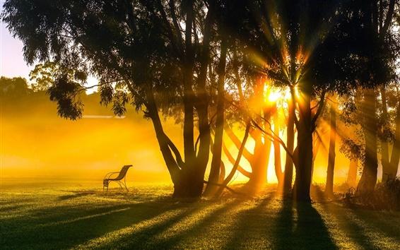 Wallpaper Sunrise, morning, fog, trees, sun rays